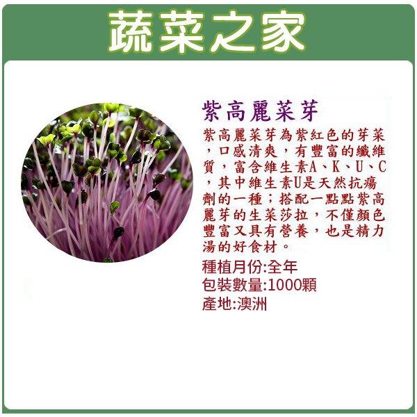 【蔬菜之家】J12.紫高麗菜芽種子1000顆(芽菜種子.蔬菜種子)