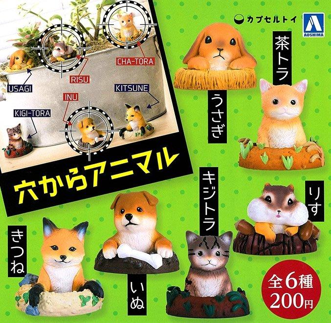 AOSHIMA*洞穴出來的小動物 扭蛋『小狗』