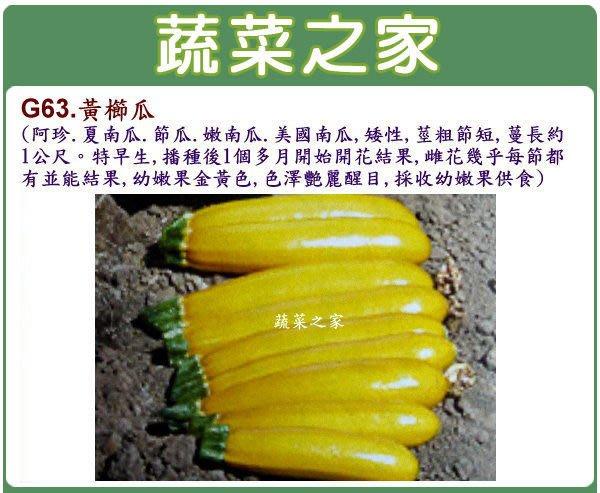 【蔬菜之家】G63.黃櫛瓜種子2顆(矮性,莖粗節短,特早生,色澤艷麗醒目.蔬菜種子)