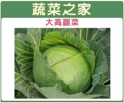 【蔬菜之家】B08.大高麗菜種子50顆日本(日本進口向陽巨型高麗菜,最大可達10幾斤.蔬菜種子)