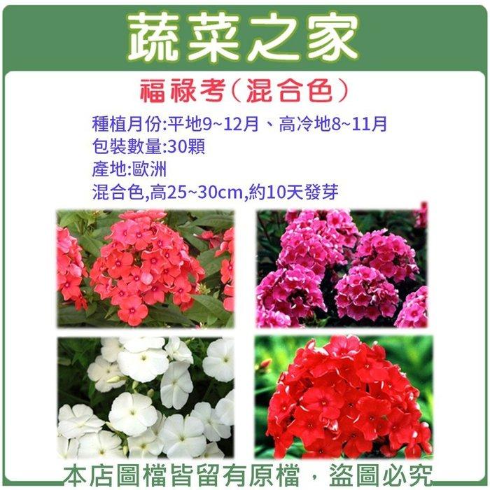 【蔬菜之家】H36.福祿考種子30顆(混合色,高25~30cm.花卉種子)