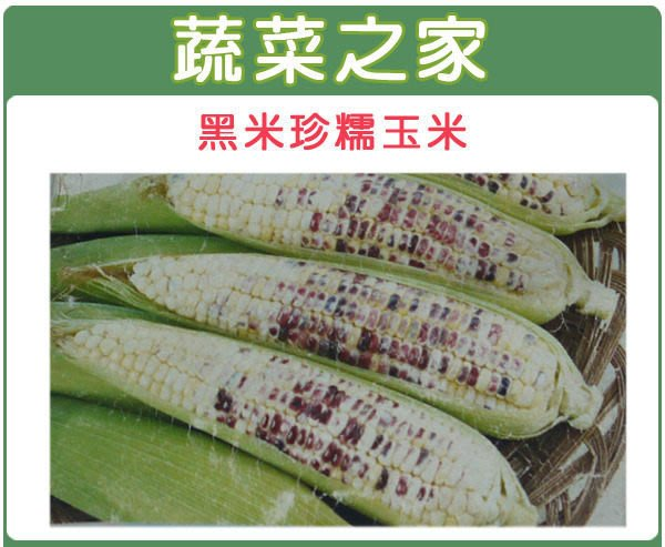 【蔬菜之家】G04.黑美珍糯玉米種子15顆(皮薄,質Q,糯性強,穗中大.蔬菜種子)
