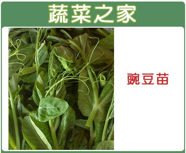 【蔬菜之家】E07.碗豆苗種子100顆(大豆苗.採食嫩稍.快炒.川燙.煮食皆可.蔬菜種子)