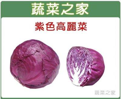 全館滿799免運【蔬菜之家00B19】大包裝.紫色高麗菜種子3克※此商品運費請選宅配※