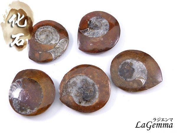 ☆寶峻水晶☆單個168元~鸚鵡螺化石 斑彩螺圓片(Ammolite)背面未拋光 古生物動物化石 特色禮品-大