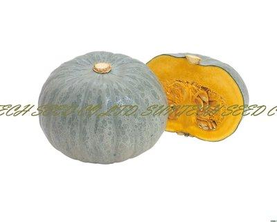 【優良蔬菜種子】白馬栗南瓜~白瓷器光澤外觀及高粉質Q度的風味栗南瓜