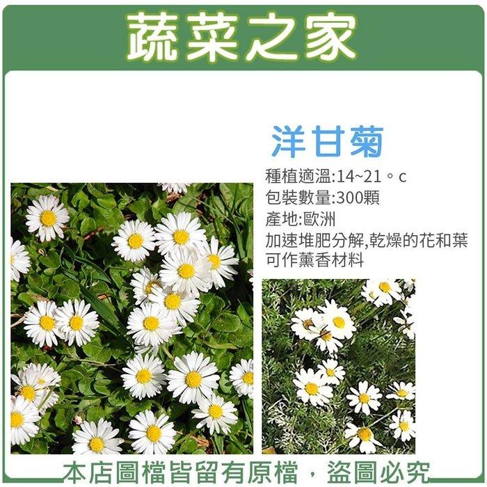 【蔬菜之家】K03.洋甘菊種子300顆(可作薰香料.香草種子)