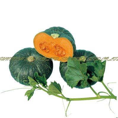 【優良蔬菜種子】天味栗南瓜~早生豐產,小型栗子風味南瓜品種