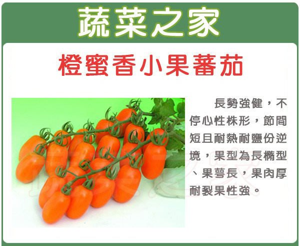 【蔬菜之家】G73.橙蜜香小番茄種子2顆(長勢強健.果肉厚耐列果性強.蔬菜種子)