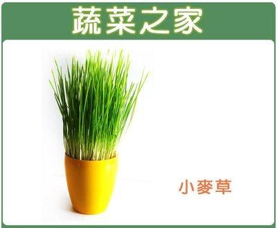 【蔬菜之家】J04.小麥草(貓草)種子40克(一般攪小麥草汁飲用,亦可種植來當寵物食物)