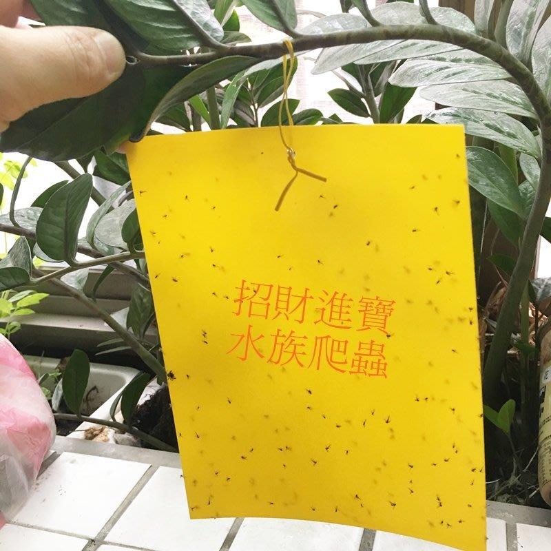 黏蟲板 果蠅 蒼蠅 養寵物 黏蟲紙 誘蟲貼紙 害蟲 捕蠅紙 陸龜 蜥蜴 昆蟲 甲蟲 狗籠 爬蟲箱 有機蔬菜園盆栽 除蟲