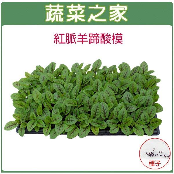 【蔬菜之家】K30紅脈羊蹄酸模種子(紅脈酸模)50顆(葉子有檸檬的香味.新鮮葉片為沙拉菜中最佳風味.香草種子)