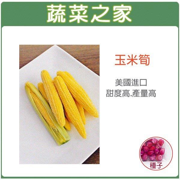 【蔬菜之家】G97玉米筍種子20顆(美國進口.F1.專門種玉米筍的玉米筍種子.甜度高.產量高.產期一致.玉米筍大小一致)