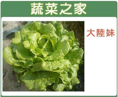 【蔬菜之家】A19.大陸妹種子2500顆(大陸A菜.葉色淡綠.半結球狀.質脆.甜.抽苔晚 .蔬菜種子 )