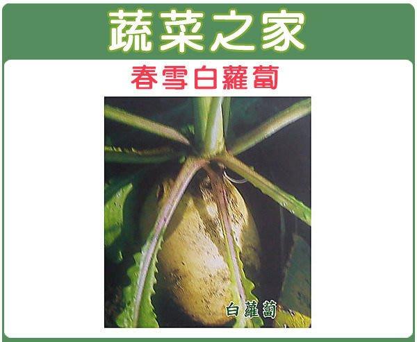 【蔬菜之家】C02.春雪白蘿蔔種子1000顆(矸仔杙型.葉丈中大,根形優美.端正。肉質細緻.幼嫩.蔬菜種子)