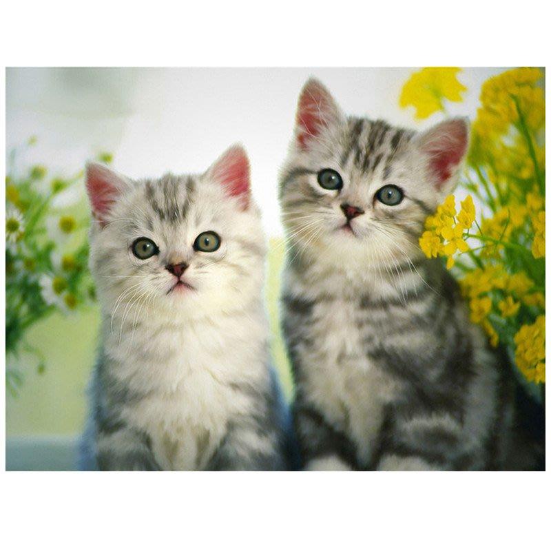 【小笨媽媽手創館】 可愛動物鑽石貼畫材料包.可愛的貓咪..自己動手diy..滿鉆..客廳.房間都最佳選擇..