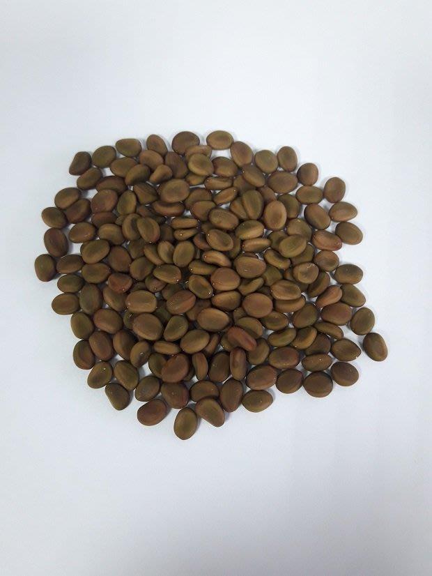 S-169【種子盆栽】金合歡種子15顆30元。別名:鴨皂樹、刺仔(莿仔)
