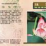 妙蓮華 CG- 5008 國語佛經課誦- 往生咒 CD...