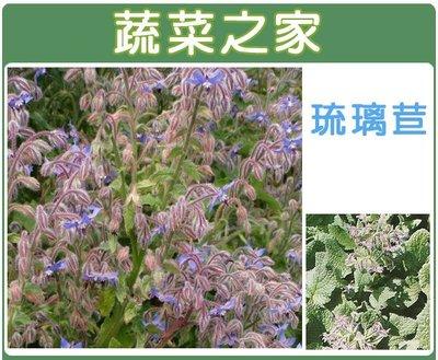 【蔬菜之家】K11.琉璃苣種子40顆(...