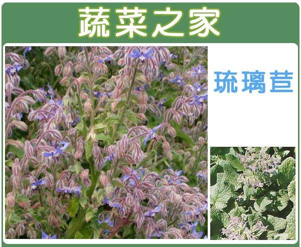【蔬菜之家】K11.琉璃苣種子40顆(花朵、葉可食用,亦可做冷飲.醋和花草茶,乾燥花可做薰香材料.香草種子)