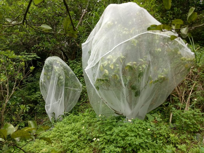 40網目超密,防蟲網,防鳥網,有機果樹必備,有拉鍊可方便進出,長2米*寬2米*高2米,DIY網室