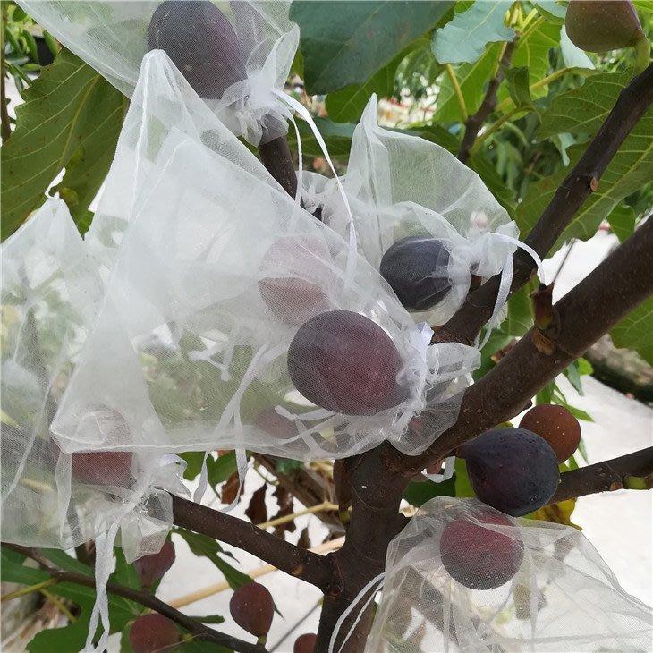 (此為尺寸10*13下單區)雪紗袋 紗網袋 無花果保護專用袋 水果防蟲袋 草莓 葡萄 絲瓜 火龍果 水蜜桃 防塵 網袋