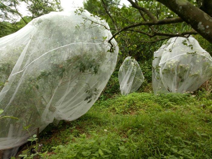 40網目,4米*4米*4米 防蟲網,#網室 #防蟲網 #防蟲防鳥 #免農藥 #免套袋