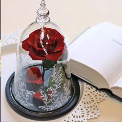 盆栽蠟燭香氛美學