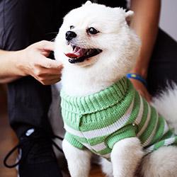 小型犬中大型犬毛衣