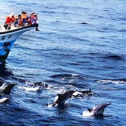 花蓮多羅滿 賞鯨兩人成行券