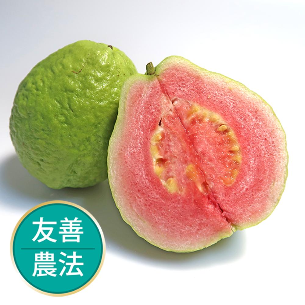 【果物配】紅心芭樂.友善農法(3kg/7-9顆)