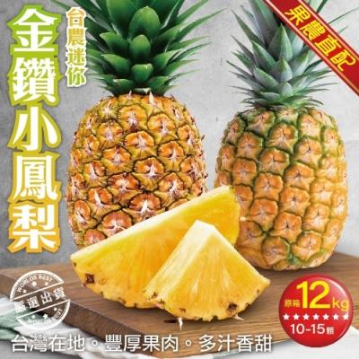 【果農直配】台農迷你金鑽小鳳梨原箱12kg(約10-15支)