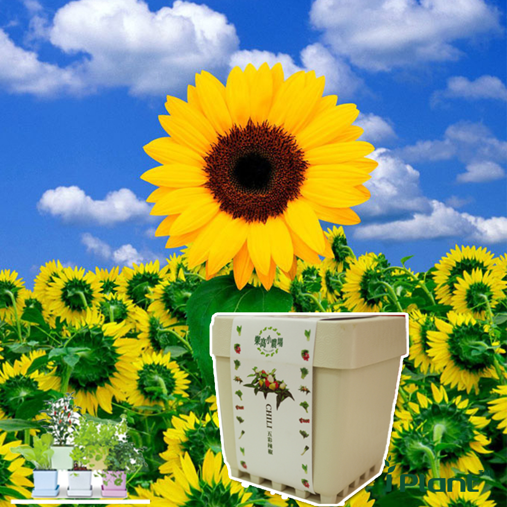iPlant積木農場-向日葵