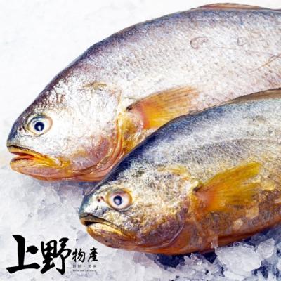 【上野物產】鮮嫩巨無霸急凍黃魚(600-700g±10%/隻)x2隻