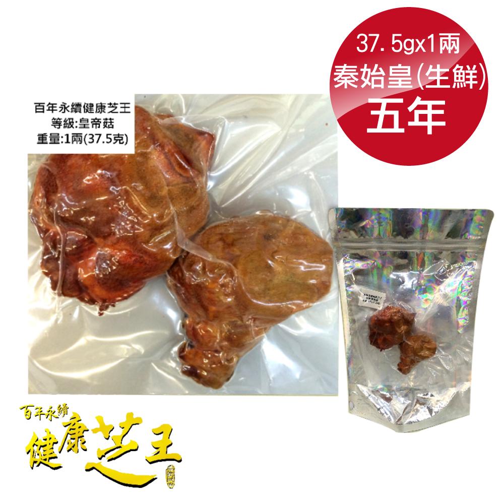 百年永續健康芝王 (五年) 秦始皇菇 皇帝菇 生鮮品 37.5g /1兩