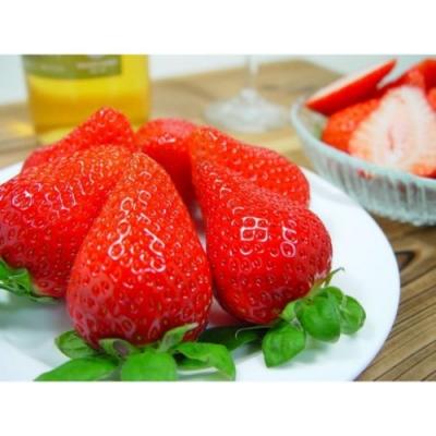 【天天果園】嚴選苗栗大湖香水草莓20顆入(每盒約400g)