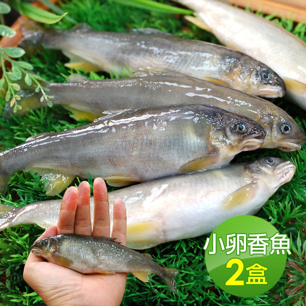 築地一番鮮-宜蘭帶卵小香魚2盒(11-17尾裝/920g/盒)免運組