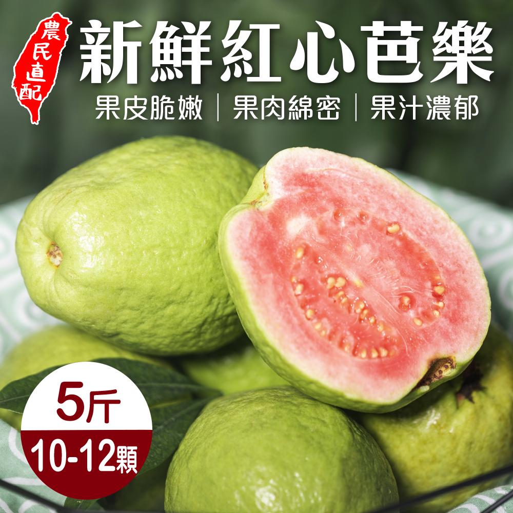 【果農直配】台農嚴選紅心芭樂5斤 x1箱 (每箱約10-12顆)