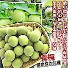 【天天果園】台灣嚴選青梅 x15台斤
