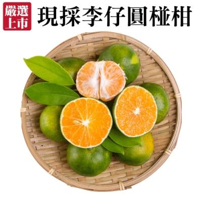 【天天果園】嚴選現採李仔圓椪柑5斤