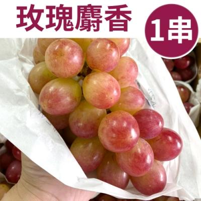 [甜露露]全新品種日本玫瑰麝香葡萄M 1串入(430-500G)