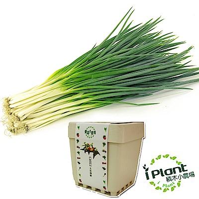 iPlant積木農場-青蔥