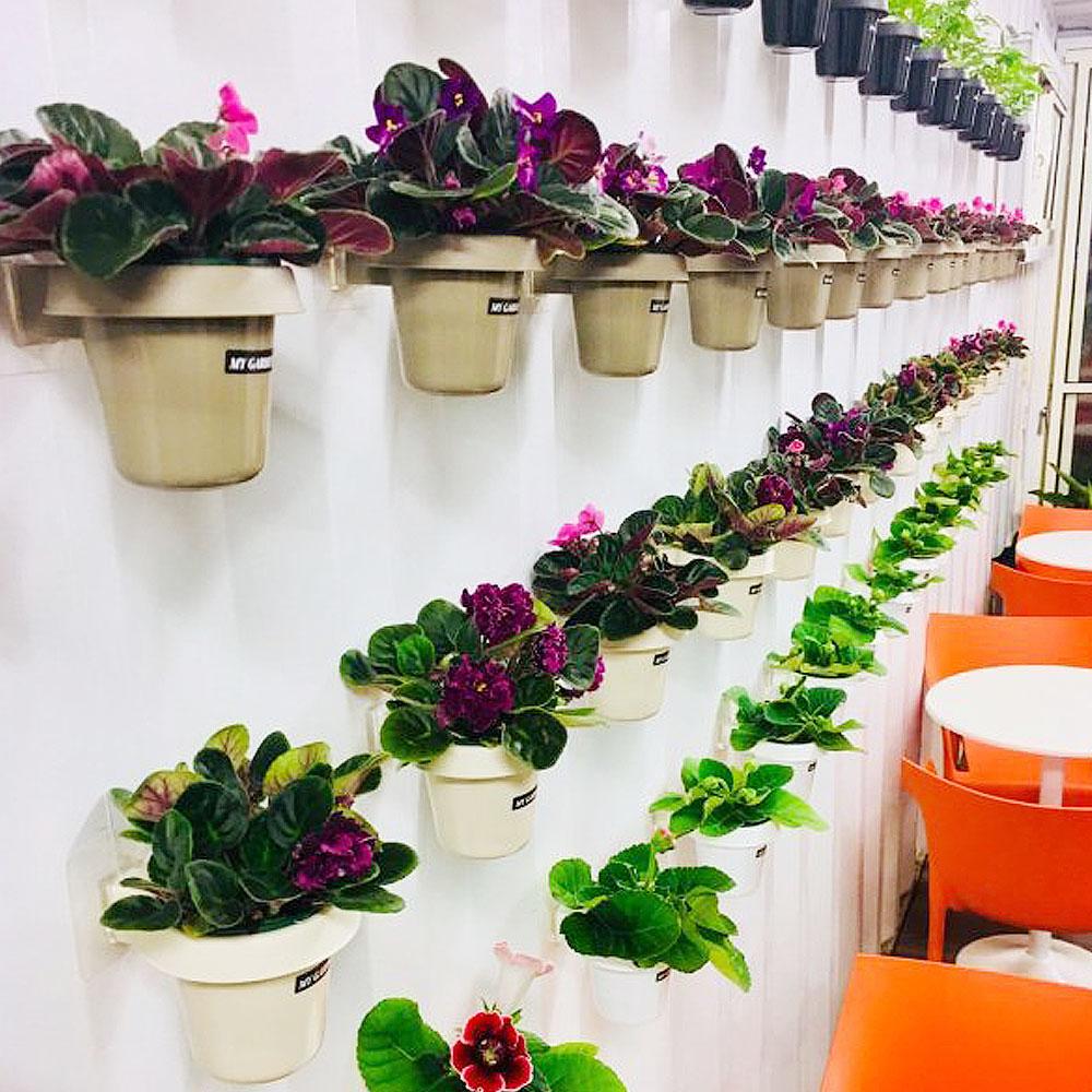 My Garden療癒植物容器 壁貼式/3吋盆栽架*2入-DY523