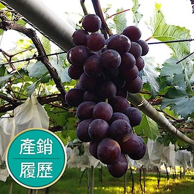 【果物配】巨峰葡萄.產銷履歷(2.5kg/5包入)