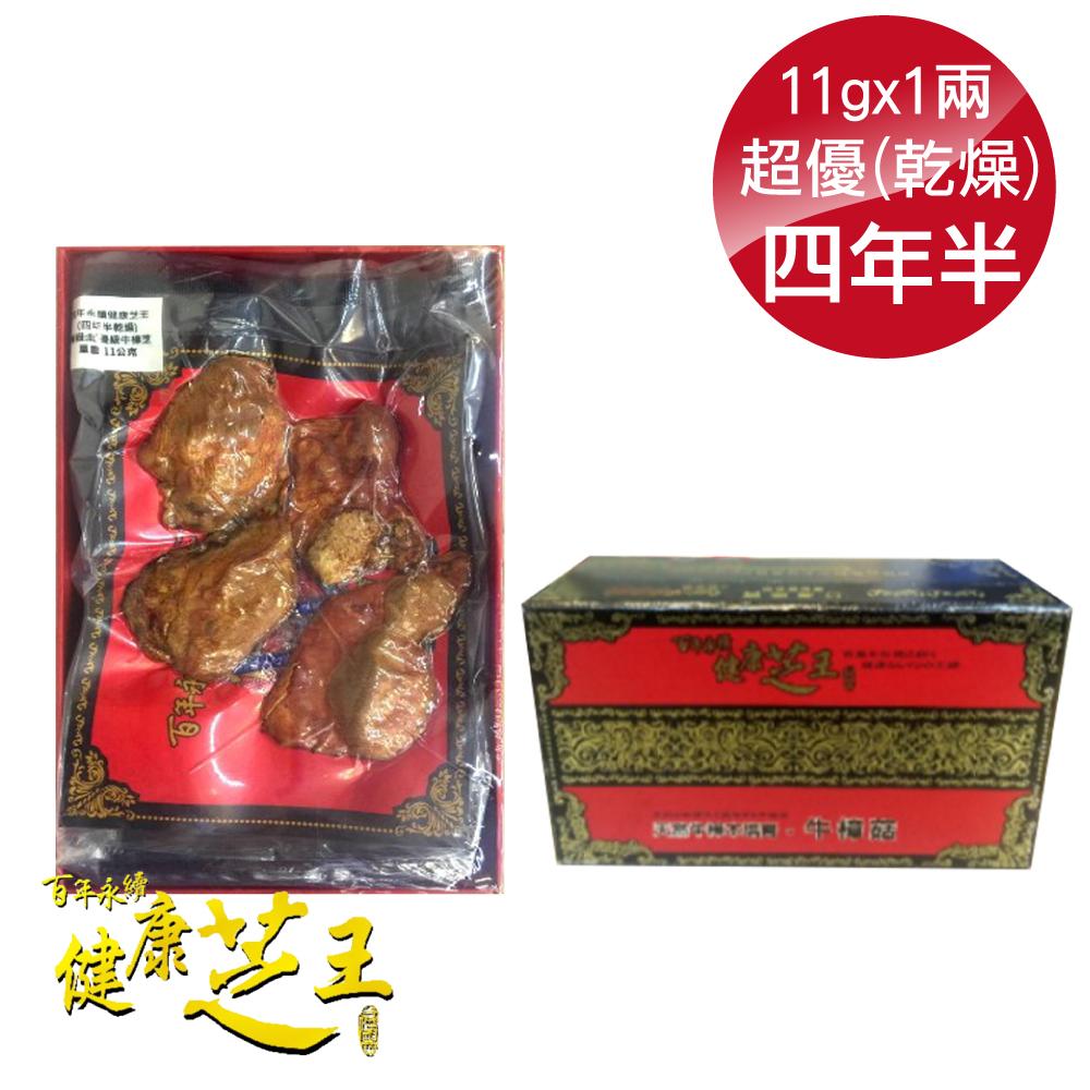百年永續健康芝王 (四年半乾燥) 超優級牛樟芝 乾燥品 11g x1兩