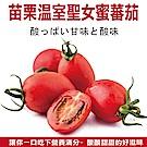 (滿799免運)【天天果園】苗栗溫室聖女蜜蕃茄(每盒約300g) x1盒