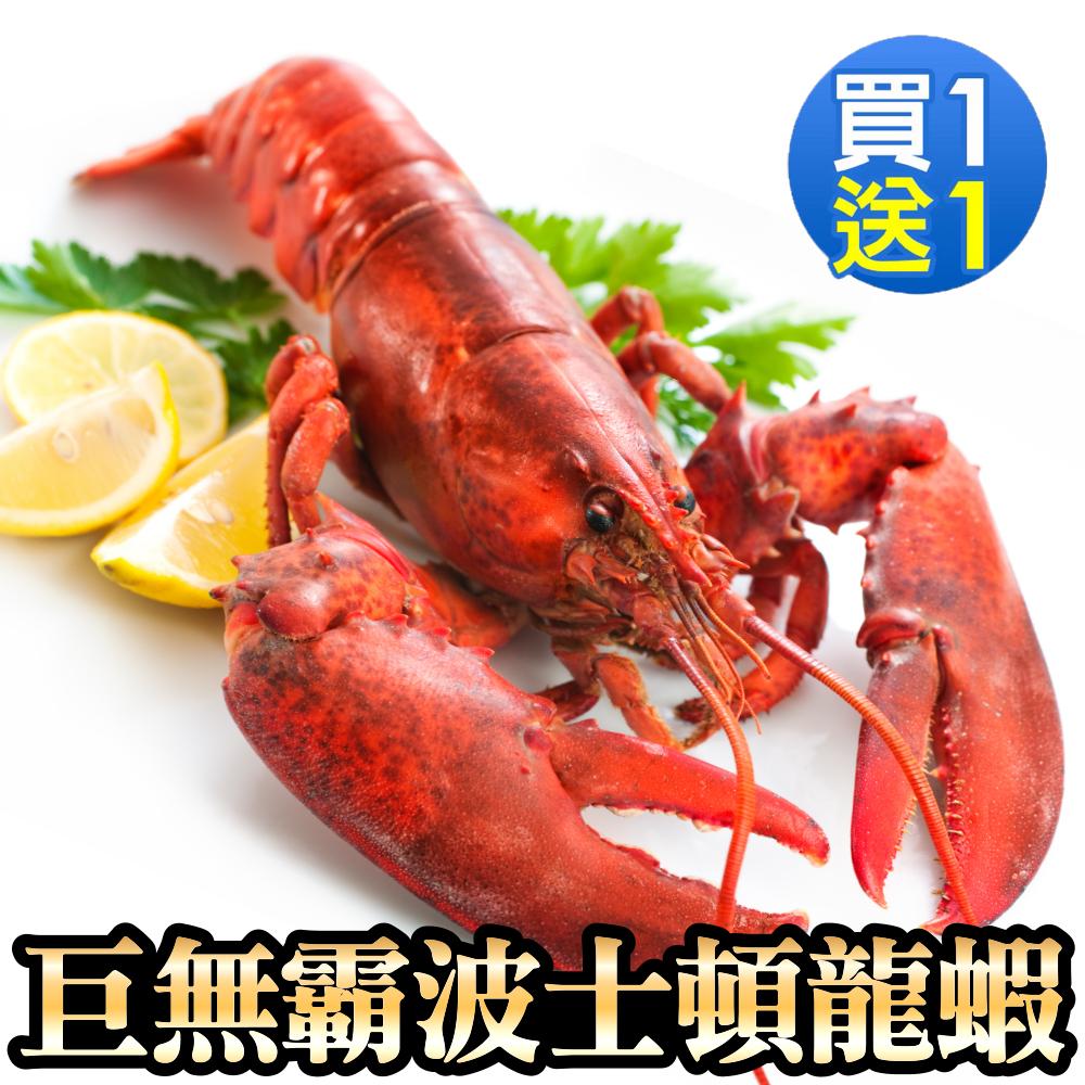 買1送1【海陸管家】加拿大波士頓螯龍蝦 共2隻(每隻400g-500g)