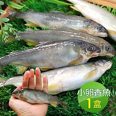 築地一番鮮-宜蘭帶卵小香魚1盒(11-17尾裝/920g/盒)免運組