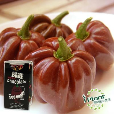【 iPlant 】易開罐頭小農場-巧克力辣椒