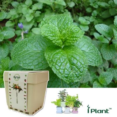 iPlant積木農場-薄荷
